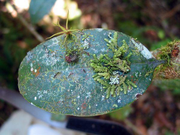 Artenvielfalt auf lebenden Blättern